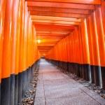 Torii gates at Fushimi Inari Kyoto — Stock Photo