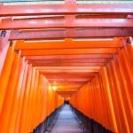 Torii gates — Stock Photo