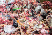 Raw Fish garbage — Stock Photo