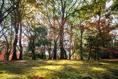 Jesień w ogrodzie — Zdjęcie stockowe