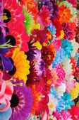 Beautiful colored flowers — Stock Photo
