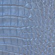 Crocodile skin pattern - Stock Photo