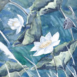 Original watercolor painting,lotus — Stok Fotoğraf #12520489