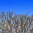 Branch of Leelawadee plant on blue sky — Stock Photo