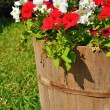 Flower in wooden bucket — Stock Photo