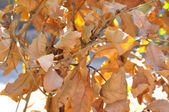 Dried leaves for background — Stock Photo