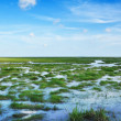 Bog in Thailand — Stock Photo #17671447
