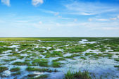 A bog in Thailand — Stock Photo
