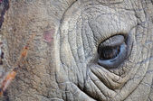 Detail of a eye great one-horned rhinoceros — Stockfoto