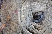 Detail oka velké jednorohý nosorožce — Stock fotografie