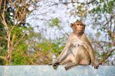Monkey sitting on glass — Stock Photo