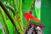 Red parrot bird close up — Stock Photo