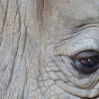 Detail of a eye great one-horned rhinoceros — Stock Photo #22490809