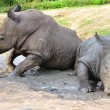 Black Rhinoceros — Stock Photo #22558089