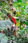 Red parrot bird close up — Stock Photo