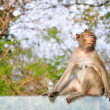 Monkey sitting on glass — Stock fotografie