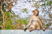 Monkey sitting on glass — Stockfoto