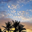 Palms scenery — Stock Photo