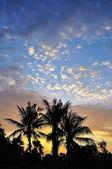 Palms scenery — Stock Photo