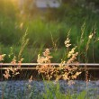 Stock Photo: Green Fresh Summer Grass On Old Useless Railway