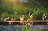 Green Fresh Summer Grass On Old Useless Railway — Stock Photo