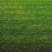 Green grass soccer field background — Stock Photo