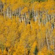 Stock Photo: Aspen pattern