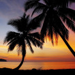 Coconut sunset — Stock Photo