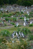 Penguin colony — Stock Photo