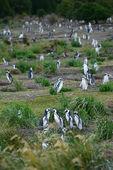 Pinguin-kolonie — Stockfoto