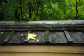 Leaf on japanese style roof — Стоковое фото