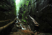 Creek gorge — Stock Photo