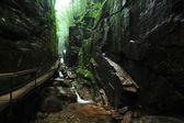Creek gorge — Stock Photo