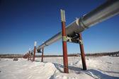 Oil pipeline in alaska — Stock Photo