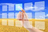 Mão de mulher empurrando virtuais ícones na interface sobre campo de trigo — Foto Stock