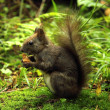Wild squirrel — Stockfoto