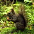 Wild squirrel — Stock Photo