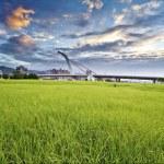 Dawn with grassland — Stock Photo