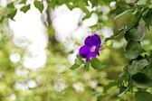 Colorful flower — Stok fotoğraf