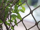 Fundo de folhas — Foto Stock