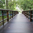 Wooden walk path — Stock Photo