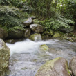 Natural stream — Stock Photo #16391167