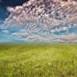 Stock Photo: Grasslands