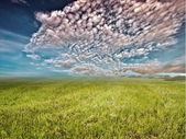 Grasslands — Stock Photo