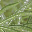 Water drops — Stock Photo