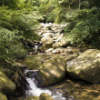 Stock Photo: Stream in forest