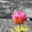 Surreal lotus — Stock Photo
