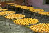 Persimmons under sunlight — Foto Stock