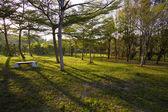 Sun beams in the autumn park — Stok fotoğraf