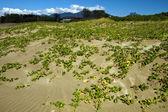 Rośliny rosną na piasku — Zdjęcie stockowe